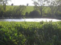 Les-rybník 2008