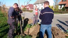 Sázení stromořadí za podpory Nadace ČEZ